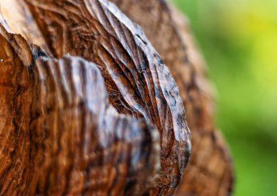 Die Entfaltung Holzskulpturen